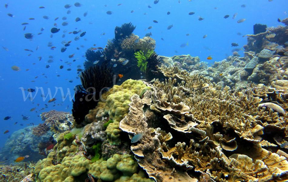 Coral Reef 8210