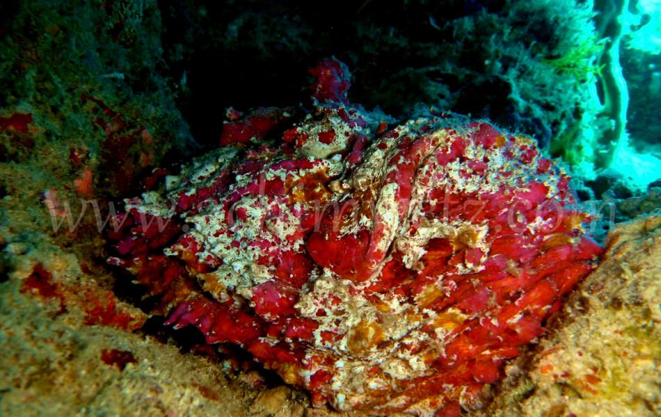 Stonefish 2764