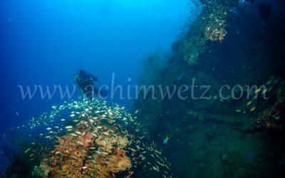 SS.Yongala-Diver 0082