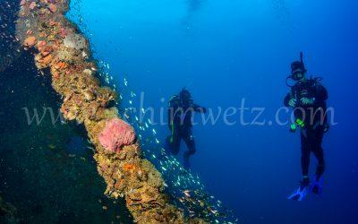 SS.Yongala-Diver 0096