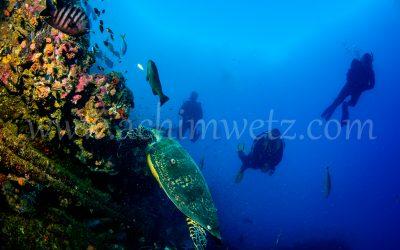 SS.Yongala-Turtle 0140