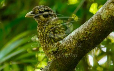 Bird 0958