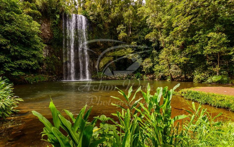 Millaa Millaa Waterfall 1222