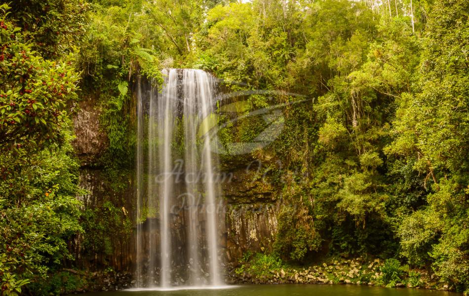 Millaa Millaa Waterfall 1251