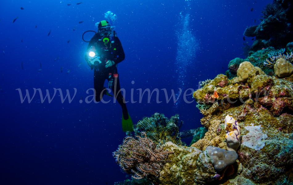 Diver 3119