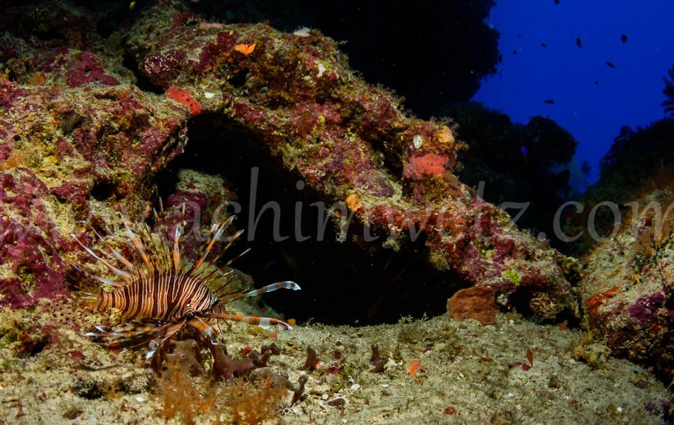 Lionfish 3154