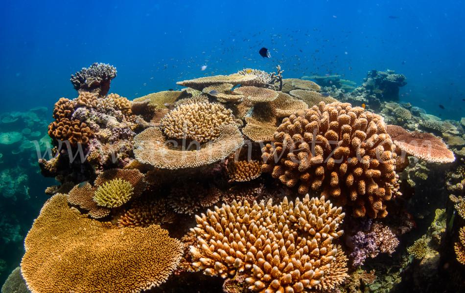 Coral Reef 4383
