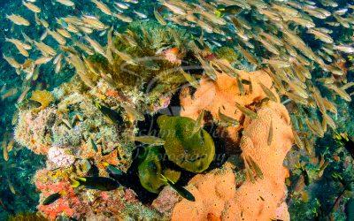 Giant Morey Eels 6188