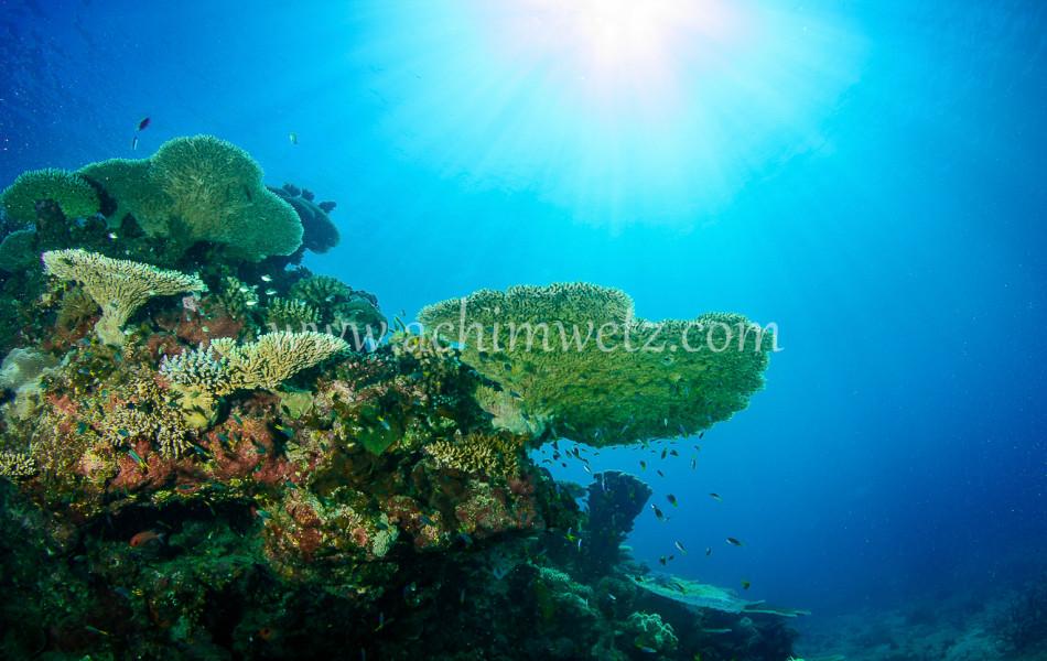 Lodestone Reef 6279