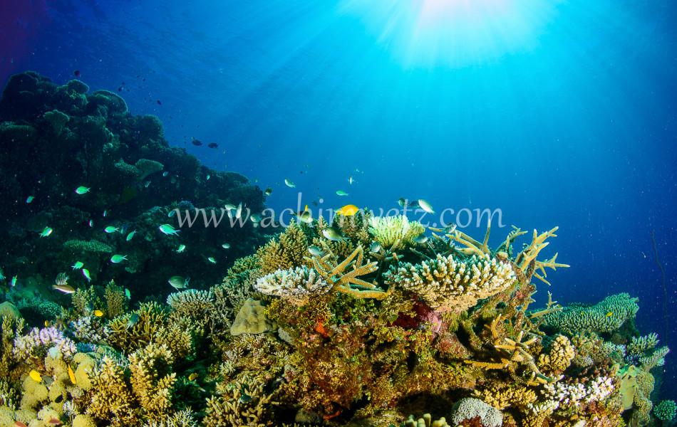 Lodestone Reef 6294