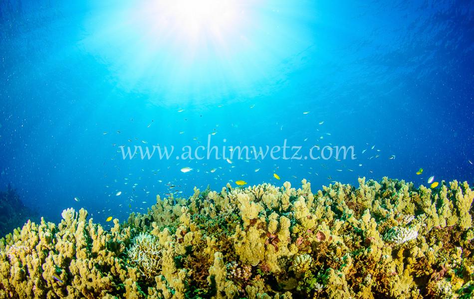 Lodestone Reef 6302
