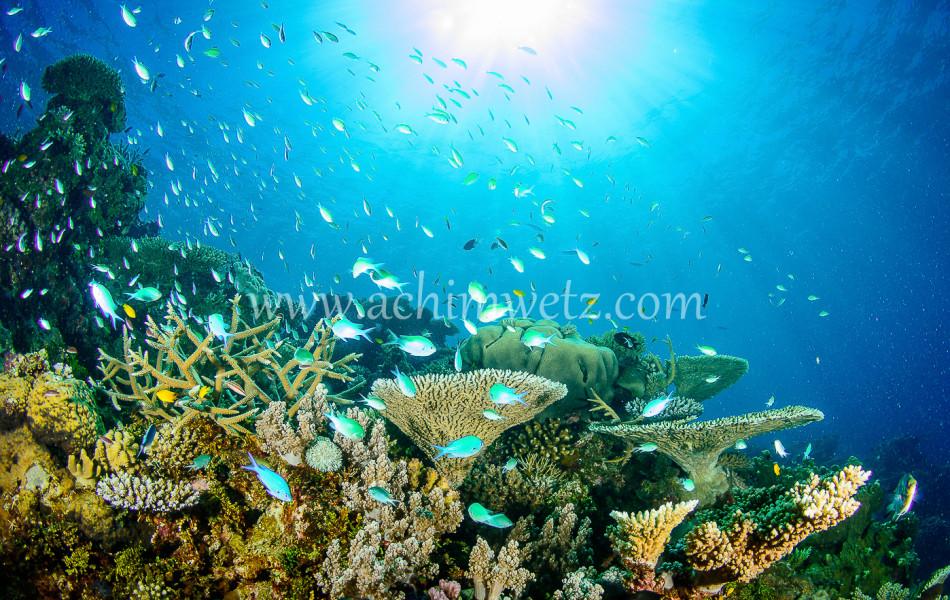 Lodestone Reef 6306