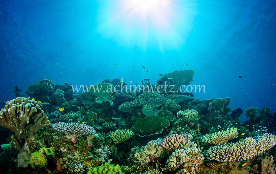 Lodestone Reef 6312