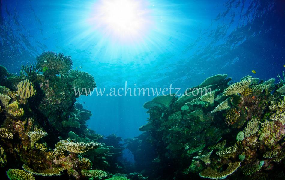 Lodestone Reef 6320