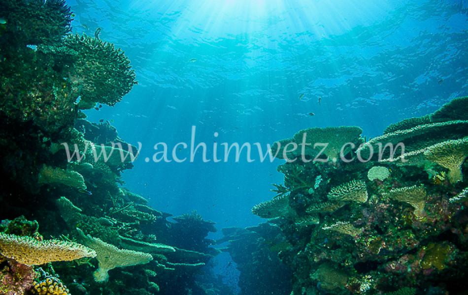 Lodestone Reef 6321