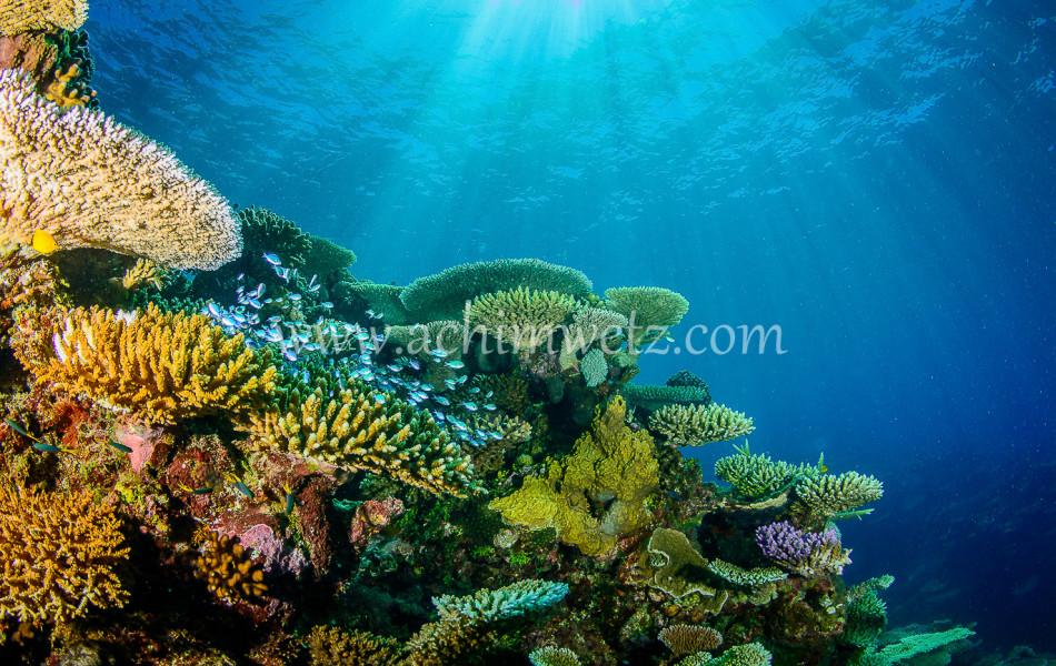 Lodestone Reef 6323