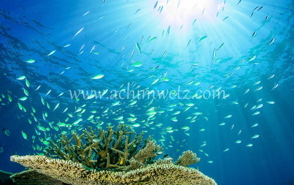 Lodestone Reef 6326