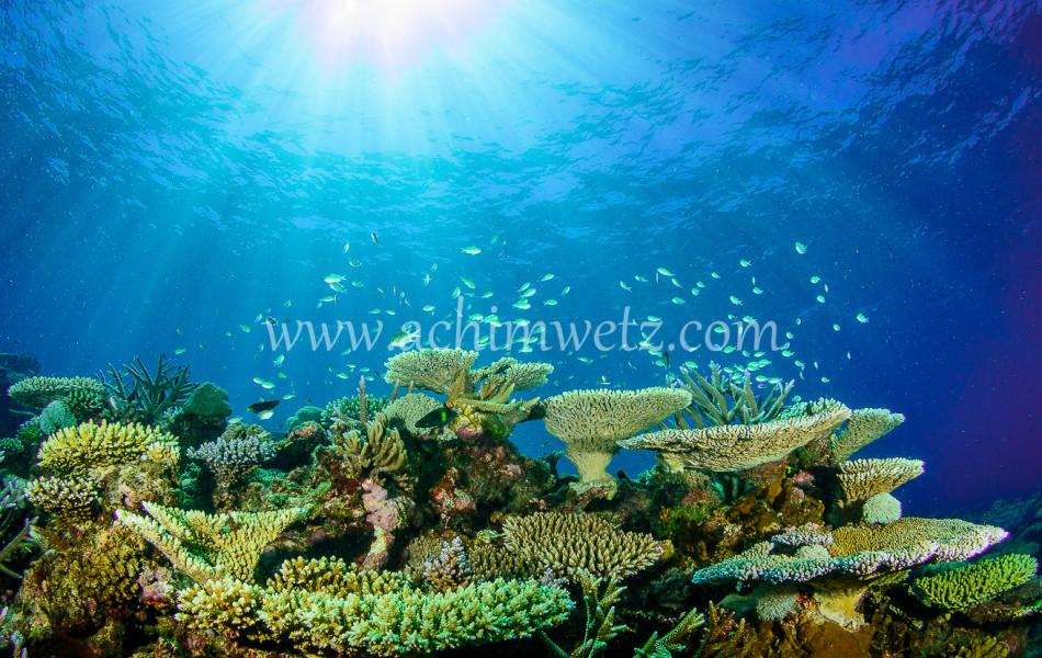 Lodestone Reef 6332