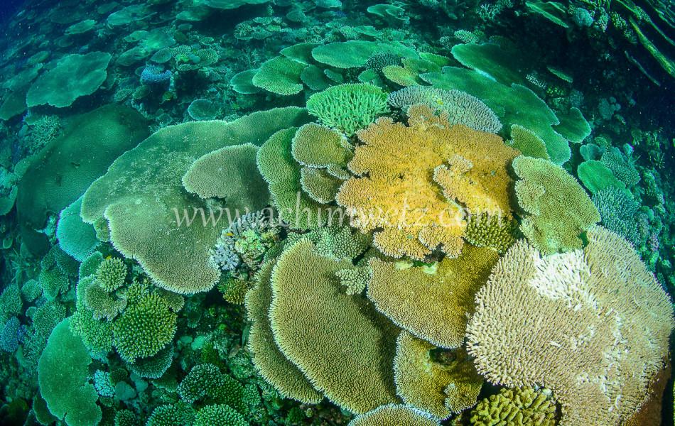 Lodestone Reef 6343