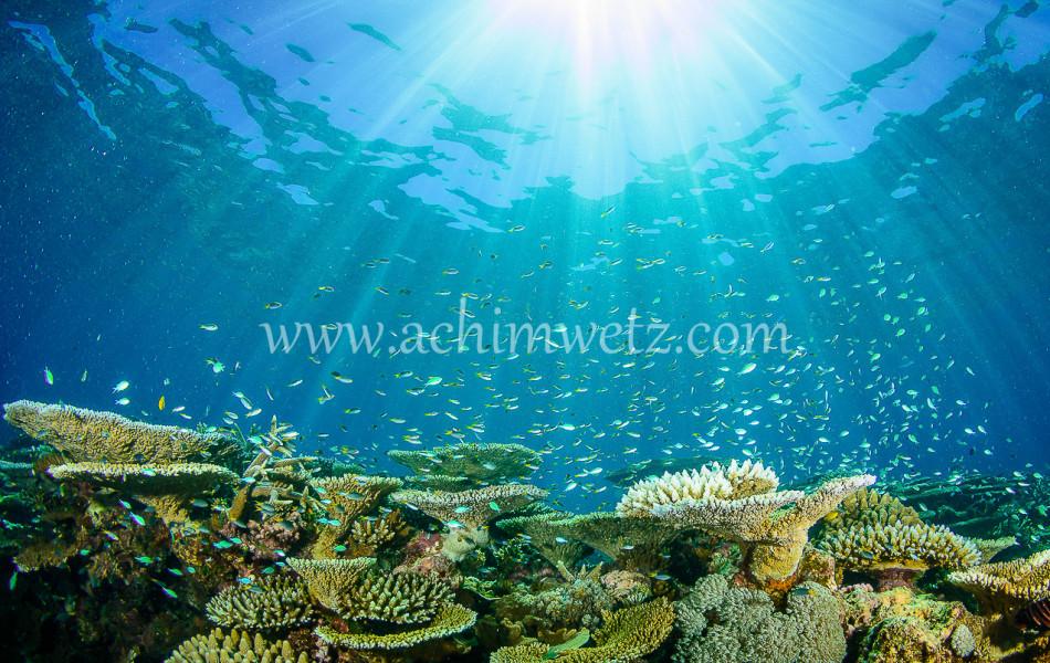 Lodestone Reef 6345
