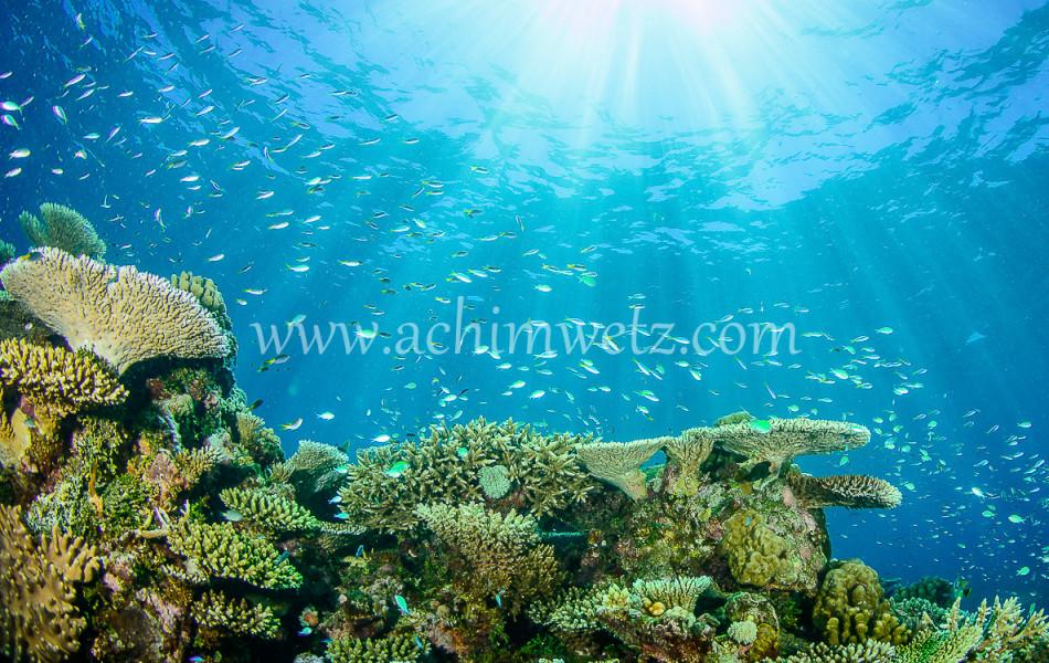 Lodestone Reef 6347