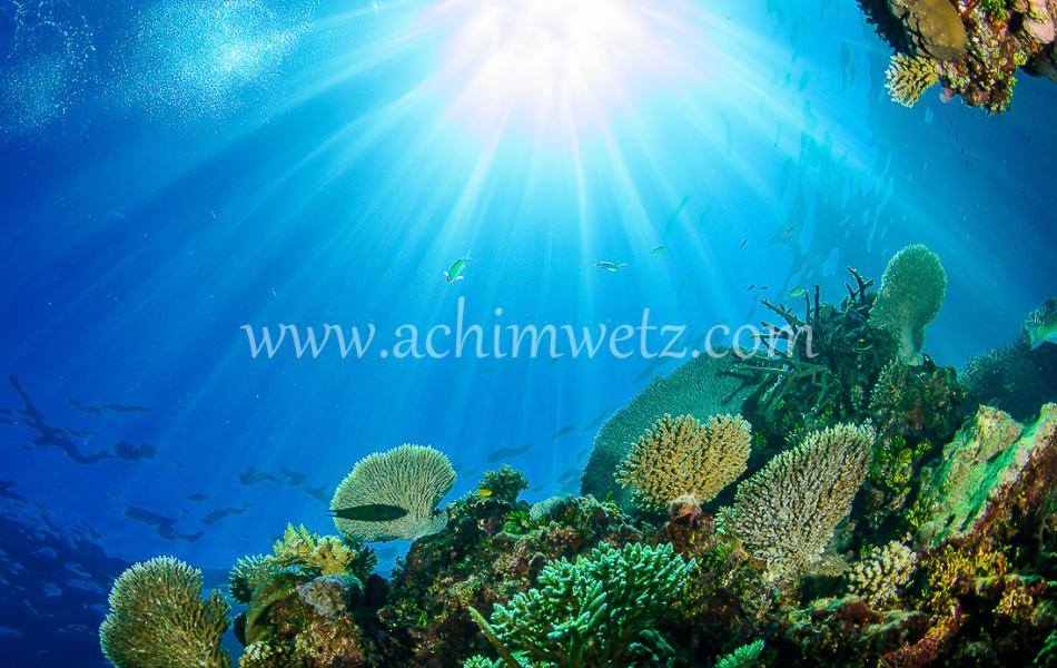 Lodestone Reef 6363