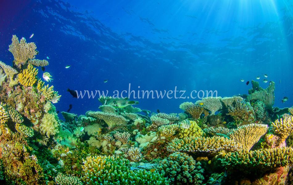 Lodestone Reef 6379