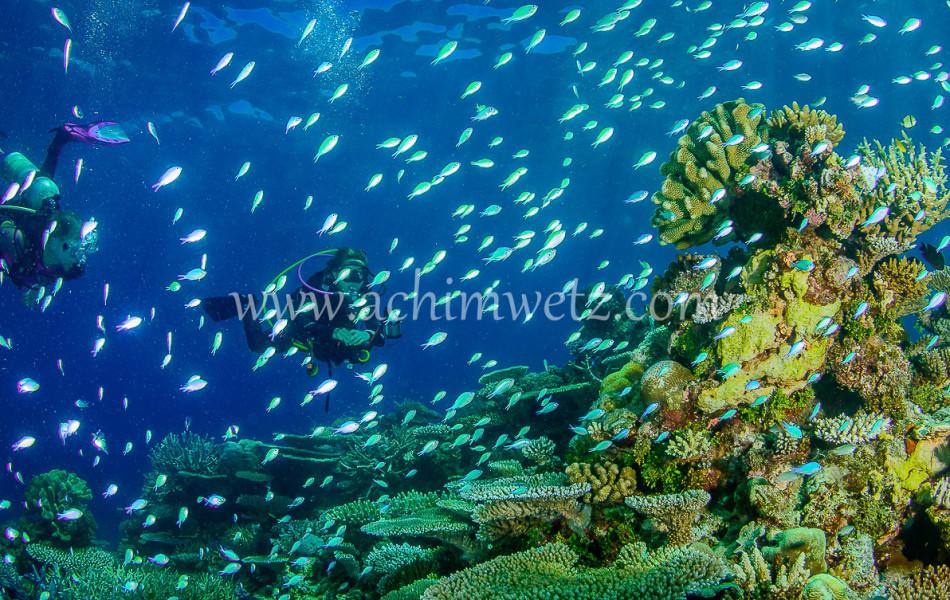 Diver 6389