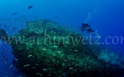 SS Yongala-Diver 6473