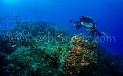 SS Yongala-Diver 6474