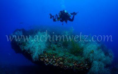 SS Yongala-Diver 6508