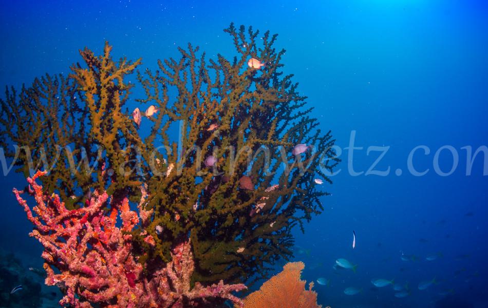 Great Barrier Reef 9865