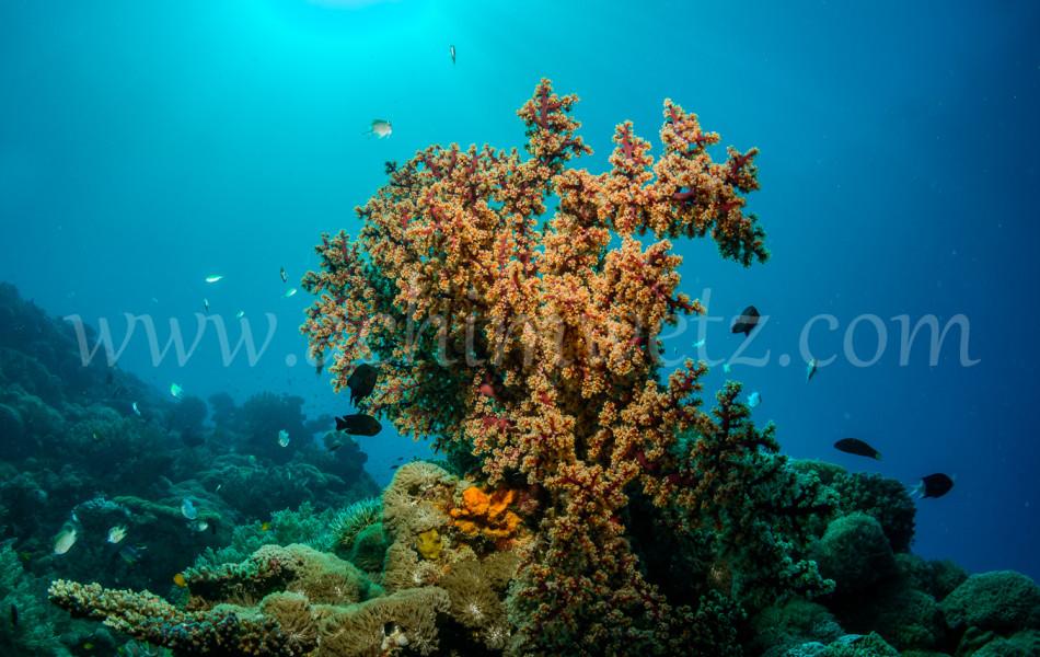 Great Barrier Reef 9883