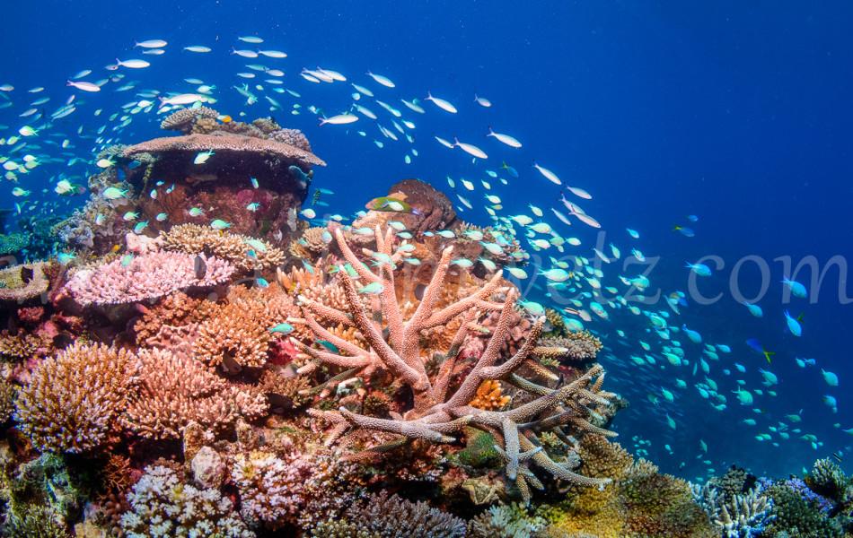 Great Barrier Reef 9897