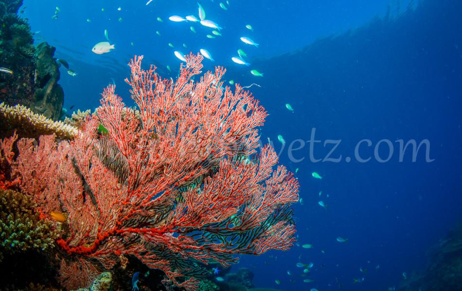 Great Barrier Reef 9899