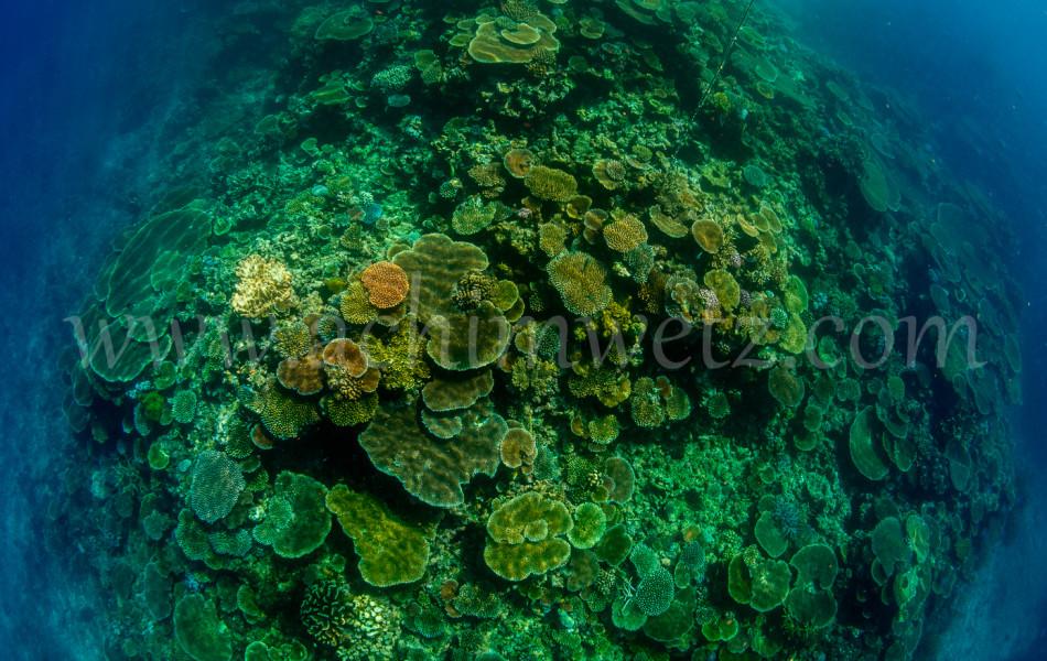 Great Barrier Reef-Hardcoral 9931