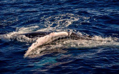 Humpback Whale 2895