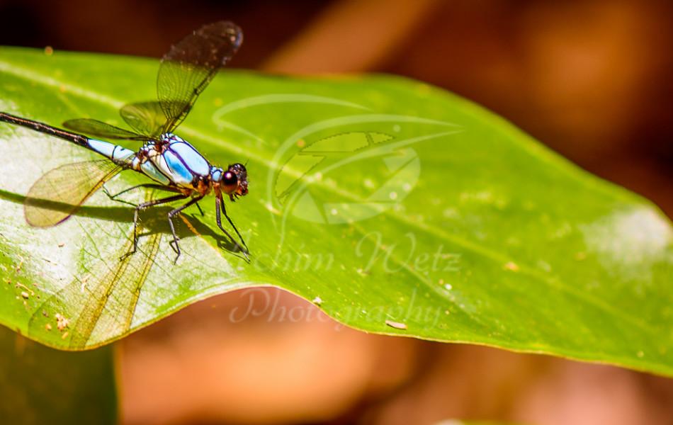 Dragonfly 0997