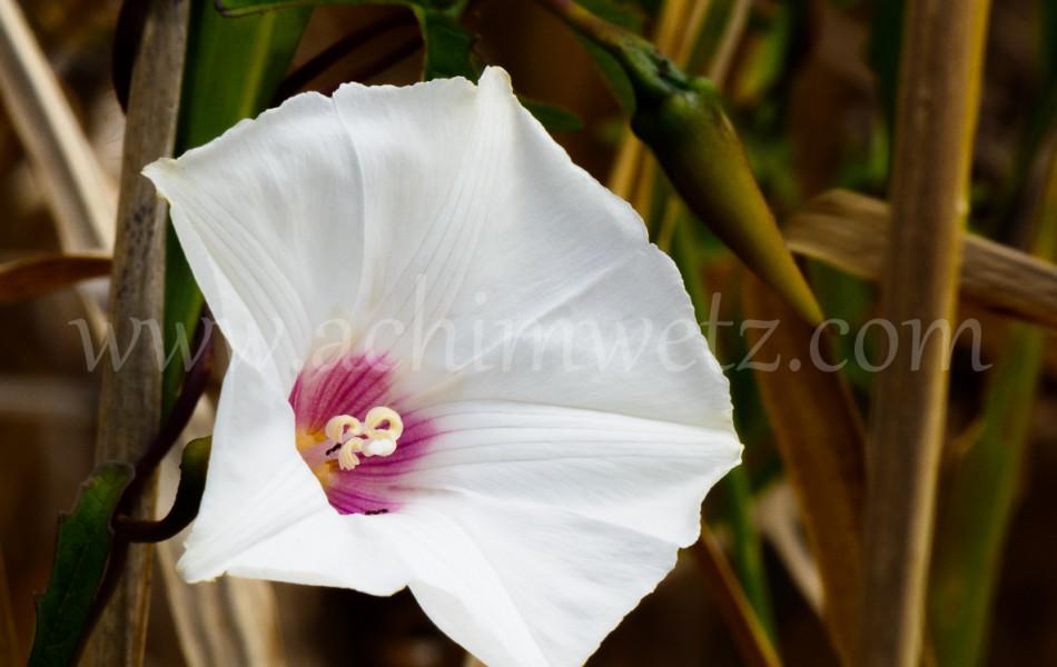 Flower 6314