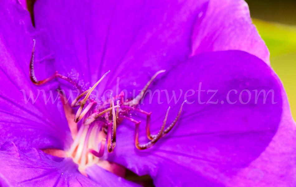Flower 6328