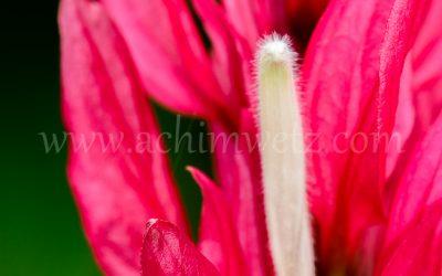 Flower 6331
