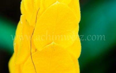Flower 6332
