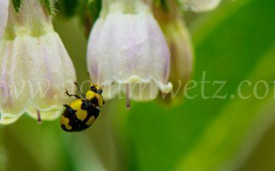 Flower 6339