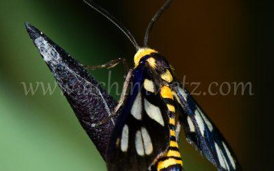 Moth 6424