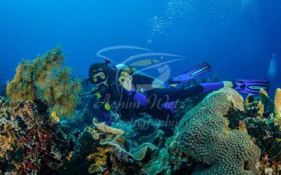 Diver 6599