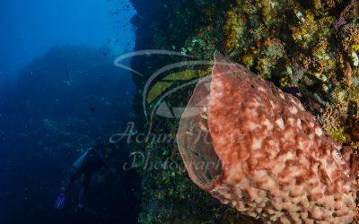 Barrel Sponge 6634