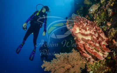 Diver 6651