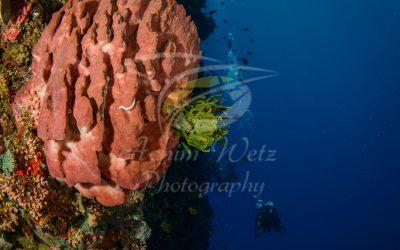 Barrel Sponge 6675