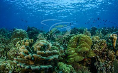 Coral Reef 6818