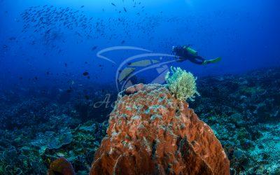 Diver 6858